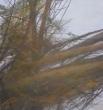 Alberi caduti 2019 pastello su cartone cm 28x25