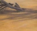 Albero caduto 2019 pastello su cartone cm 39x45